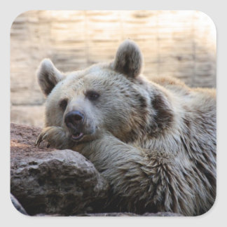 Daydreaming Bear Stickers