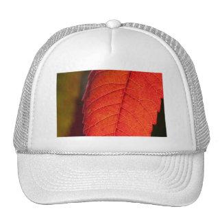 daydreams linger mesh hat