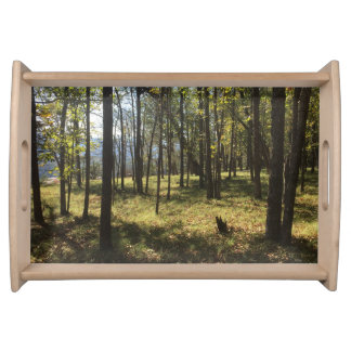 Daylight forest serving tray
