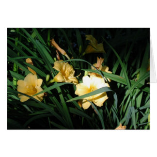Daylilies Card
