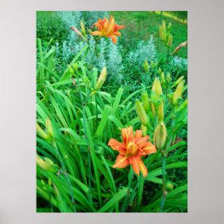 Daylilies gemelos y Artemesia Póster