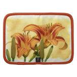 Daylilies - Hemerocallis Organizadores