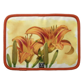 Daylilies - Hemerocallis Organizer
