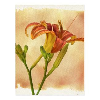 Daylilies - Hemerocallis Tarjetas Postales