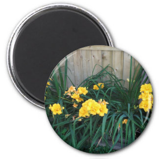 Daylilies Magnets