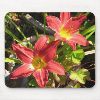 Daylilies Mouse Pad