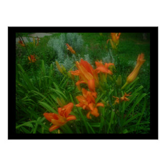Daylilies on black poster