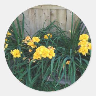 Daylilies Etiquetas Redondas