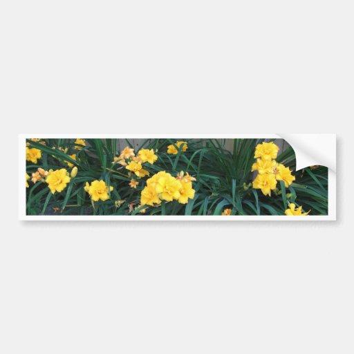 Daylilies Pegatina De Parachoque