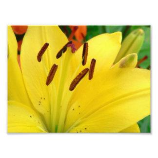 Daylily amarillo foto