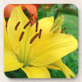 Daylily amarillo posavasos