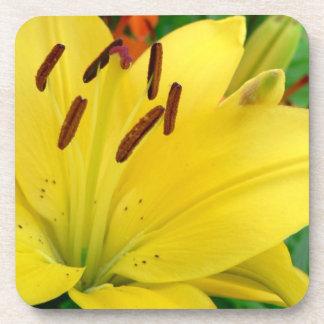 Daylily amarillo posavasos de bebida