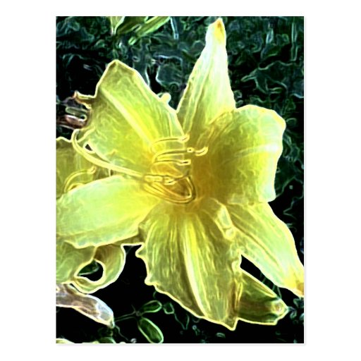 Daylily amarillo postales