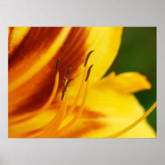 daylily closeup poster
