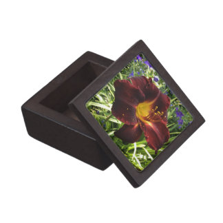 "DAYLILY ""Dominic"" Dark Wine. Keepsake Box"