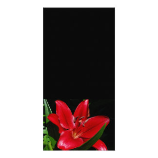 Daylily Flower Photocard Card