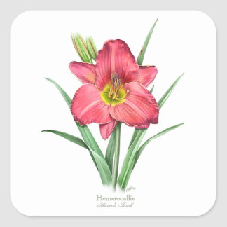 Daylily - Hunter's Torch Square Sticker