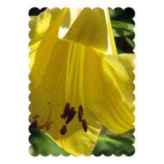 Daylily Cards