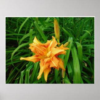 Daylily Naranja Poster