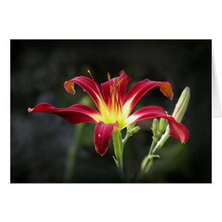Daylily Note Card