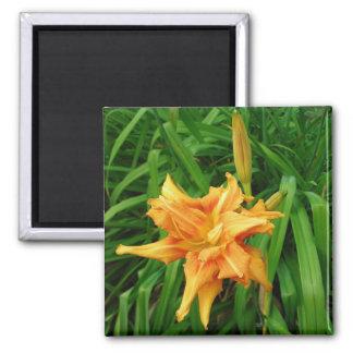 daylily: orange -Magnet