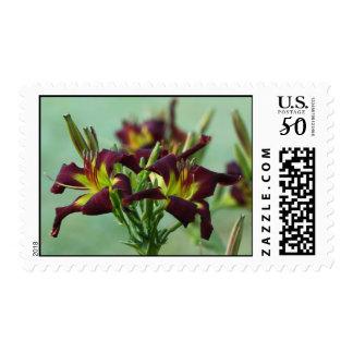 Daylily Postage Stamp