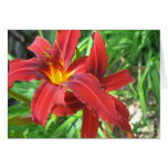 Daylily Print Note Card