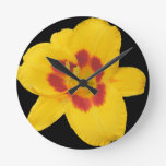 Daylily Relojes De Pared
