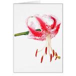 Daylily rosado y blanco felicitacion