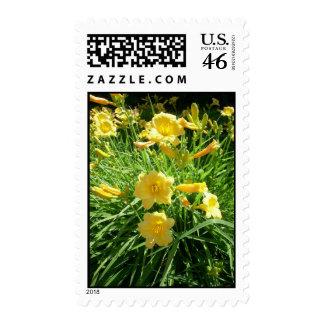 Daylily Splendour Postage