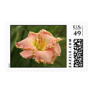 Daylily Stamps