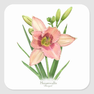 Daylily - Svengali Square Sticker