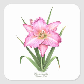 Daylily - Ultimate Pink Square Sticker