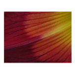 Daylily Watermark Abstract Postcards