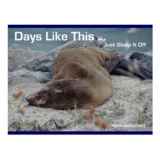 Days Like This (Sea Lion) - Postcard