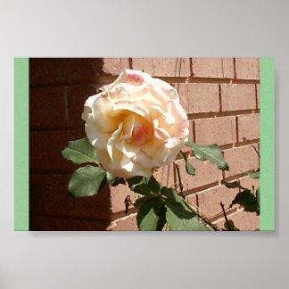 dazzle rose poster