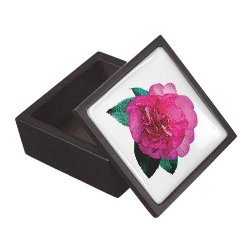 Dazzler rosado oscuro de la camelia caja de regalo de calidad