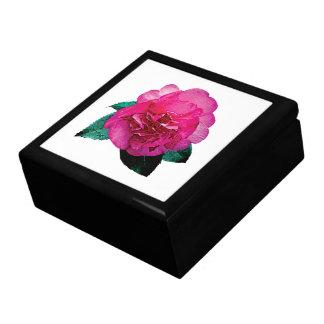 Dazzler rosado oscuro de la camelia cajas de regalo