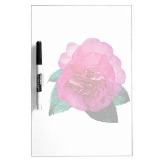 Dazzler rosado oscuro de la camelia tablero blanco