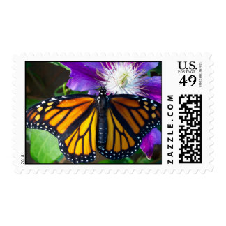 Dazzling Butterfly Stamps