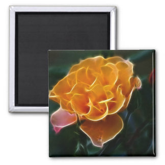 Dazzling orange rose and meaning magnet