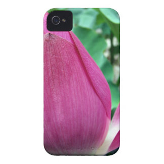 Dazzling Pink Lotus Flower Blackberry Bold Cover