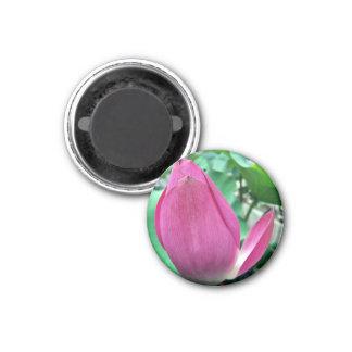 Dazzling Pink Lotus Flower Refrigerator Magnets