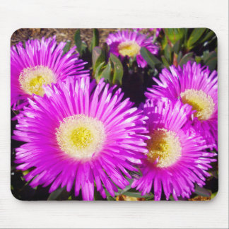 Dazzling_Purple_Daisies,_ Mouse Pad