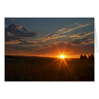 Dazzling Sunset Over Wheatfield Cards