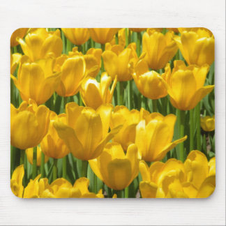 Dazzling Yellow Tulip Border Mouse Pad