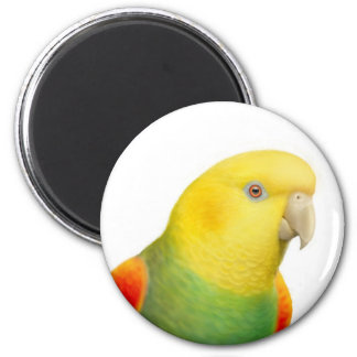 Dbl Yellow Headed Amazon Magnet