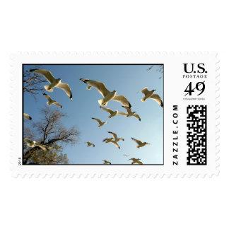 DC12.17.2004 038_edited Postage Stamp