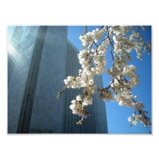 DC Temple Flowers Photo Print