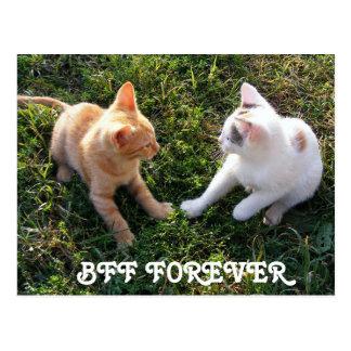 De BFF para siempre - de los mejores amigos gatos Postal